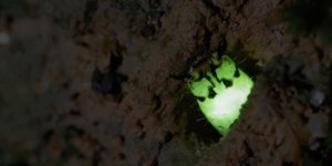 These Glow-in-the-Dark Critters Will Blow Your Mind