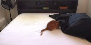 Watch This Cat Owner Try To Make The Bed. The Struggle Is Real.