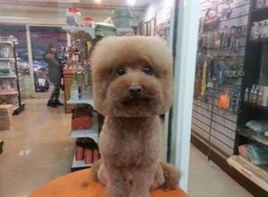 Taiwanese Dog Grooming Trend Gives Pooches Perfectly Square Or Round Heads