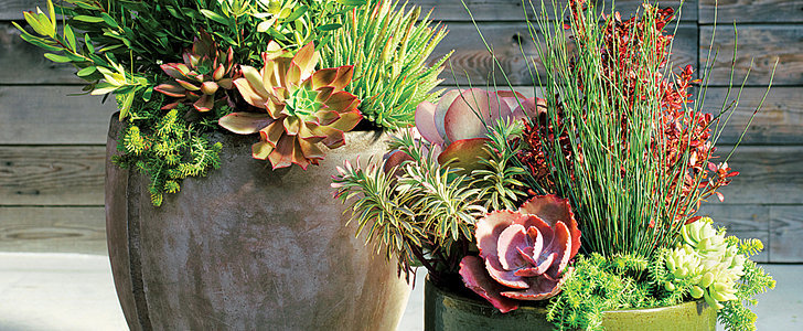30 Outdoor Decor Ideas For Succulents