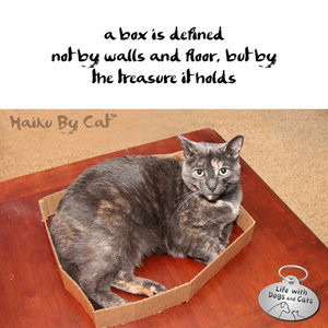Haiku by Cat: Seeking Truth in Boxes