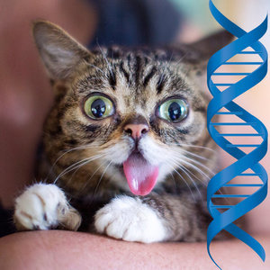 Scientists Aim to Decode the Genetic Mystery of Lil BUB