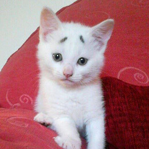 Check Out this 'Concerned' Kitten's Amazing Eyebrows
