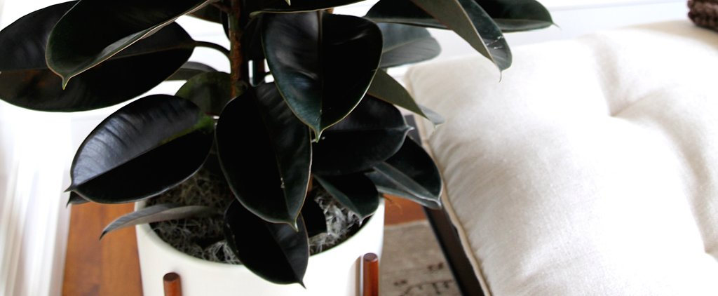 5 Houseplants That Will Cure Any Black Thumb