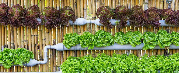 How to Grow Salad Greens in Your Garden