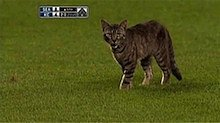 Videos We Love: These Baseball Cats Revere America's Pastime