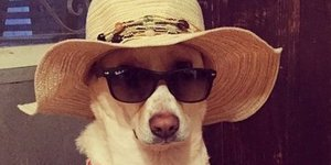 If These Dogs In Bikinis Don't Make Your Day, You're Having A Really Bad Day