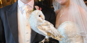 This Owl Ring Bearer Is A 'Harry Potter' Fan's Dream Come True