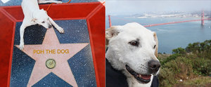 Dying Dog Goes On an Epic Adventure Across the Country