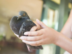 Secret Agent Bird: Pigeon Arrested in India for Suspected Spying