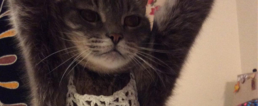 The Real Reason This Cat Is Wearing a Crochet Top
