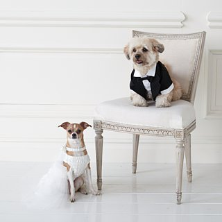 Wedding Clothes For Dogs