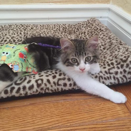 Bebe, a Kitten With Manx Syndrome, Finds a Home
