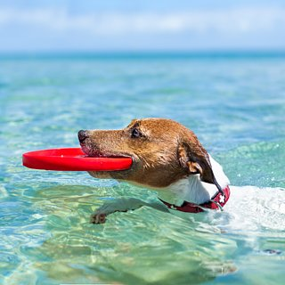 Ways to Get Your Dog Ready For Summer