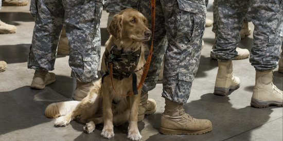 When Military Members Are Deployed, This Group Helps Provide Care For Their Pets