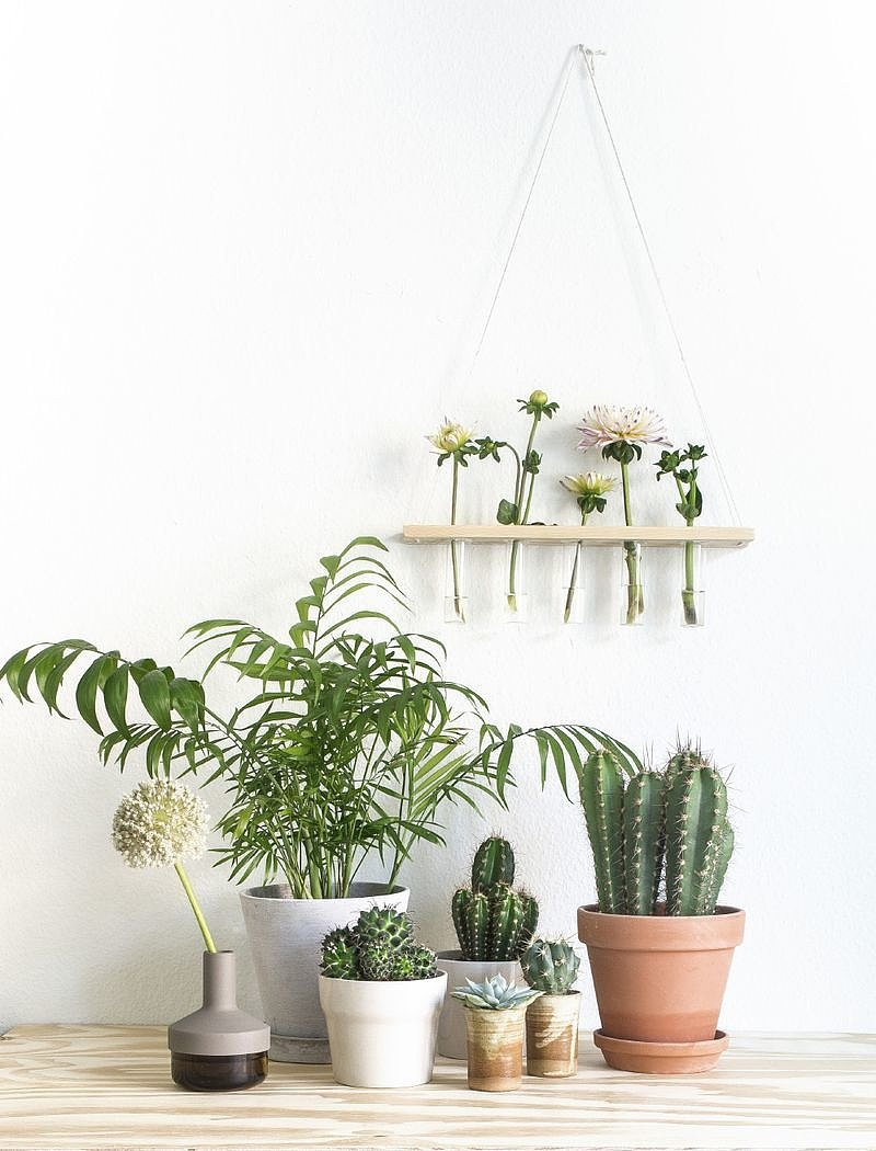 Thou Shalt Make the Most of Plants