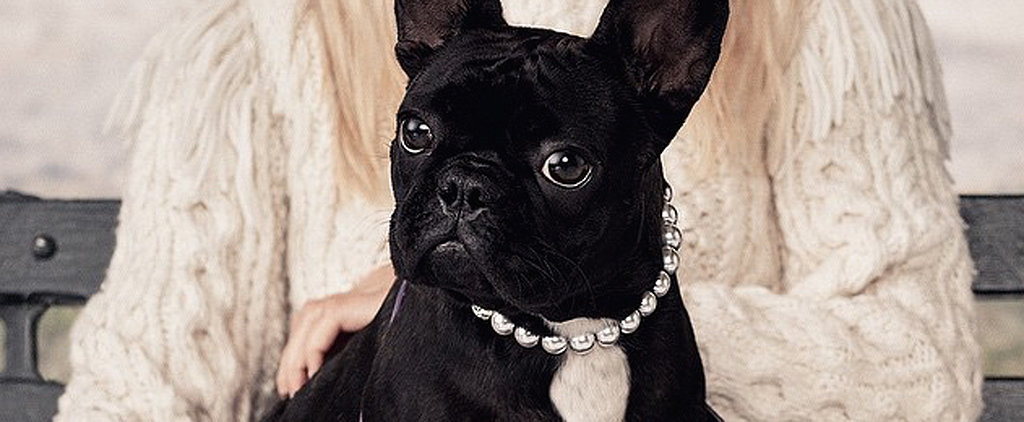 Lady Gaga's Dog Miss Asia Kinney Stars in the New Coach Pups Campaign