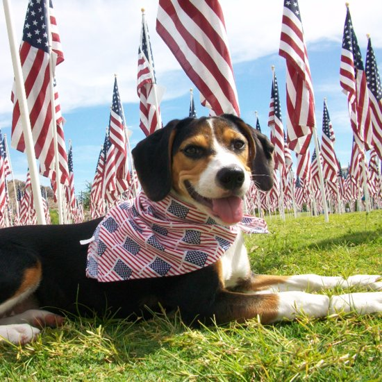 Fourth of July Tips For Dog Owners