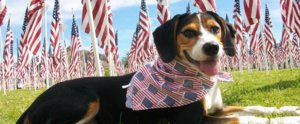 Tips to Keep Your Dog Calm During Fourth of July Fireworks