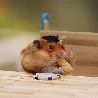 Tiny Hamster BBQ Video