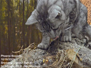 Cat Feeds Baby Birds from Own Mouth (Video)