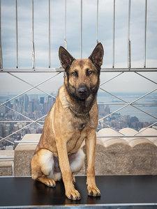 Meet Jagger, Canine Star of <em>Max</em>