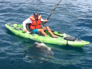 Giant Shark Pulls Florida Fisherman out of His Kayak (VIDEO)