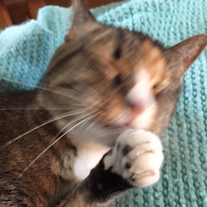 5 Ways I Routinely Goof Up My Photos of My Cats