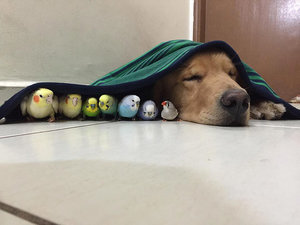 This Dog, Eight Birds and a Hamster Are the Next <em>Friends</em>