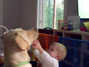 Baby Desperately Tries to Distract Dog from Women's World Cup, Fails Miserably