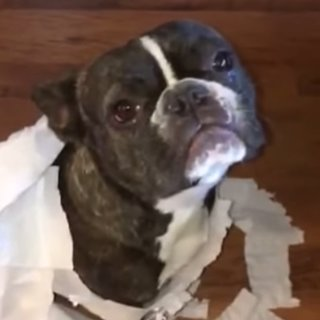 Dog Tattles on Friend | Video