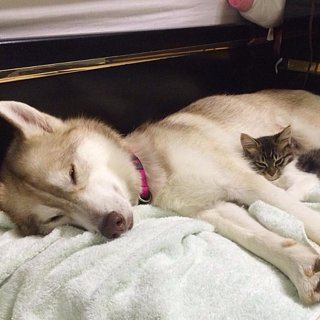 Rescued Kitten Bonds With Dog