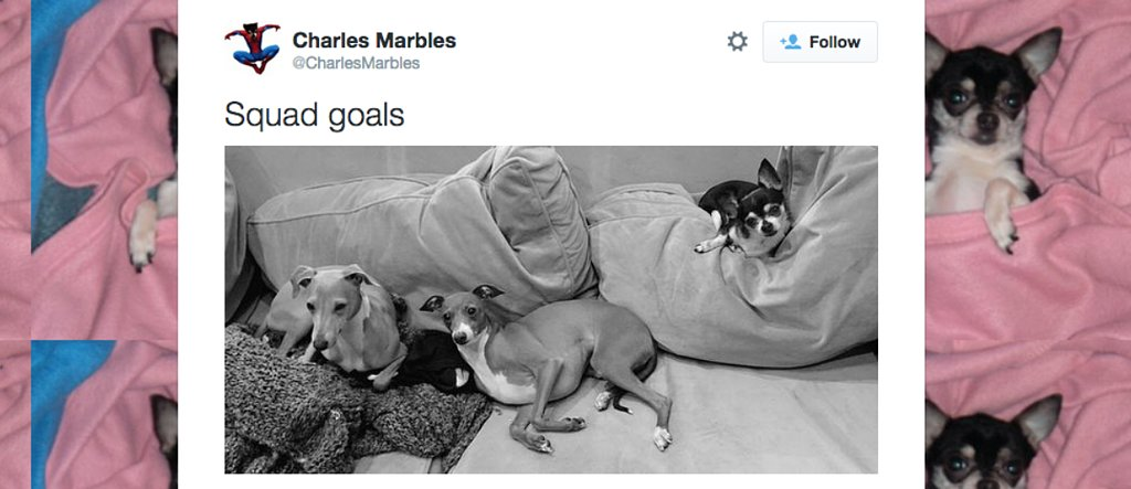 18 Best Tweets From Our Favorite Animal Twitter Accounts