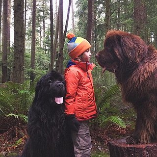 Photos of Boy With His Dogs and Horse