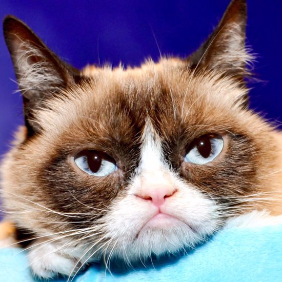 Most Famous Cats on Twitter