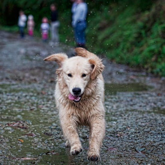 Challenge Yourself to a 5K — With Your Dog!