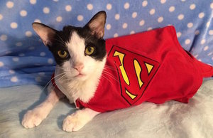 Super Hero the Hydro Cat Uses His Powers to Keep Going