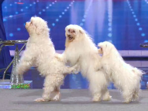 <em>America's Got Talent</em> Celebrates 10 Years of Paw-some Animal Acts