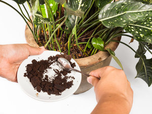 8 Fantastic Uses For Your Coffee Grounds