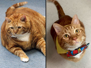 Once 41-Lbs., Skinny the Cat Debuts a Much Slimmer 19-Lb. Figure