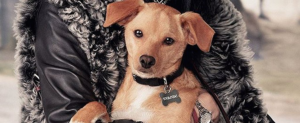 Ariana Grande's Dog Toulouse Is the New Coach Pups Campaign Star