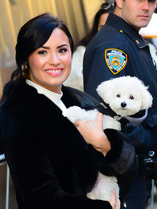 Demi Lovato's Beloved Dog Buddy Dies in Tragic Accident