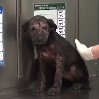 Vet Rescues Puppy From Being Euthanized