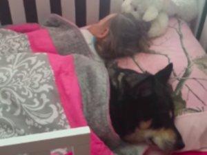 Dog Naps With Toddler Under Blanket, Internet Sighs