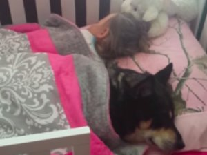 Dog Naps With Toddler Under Blanket, Internet Sighs