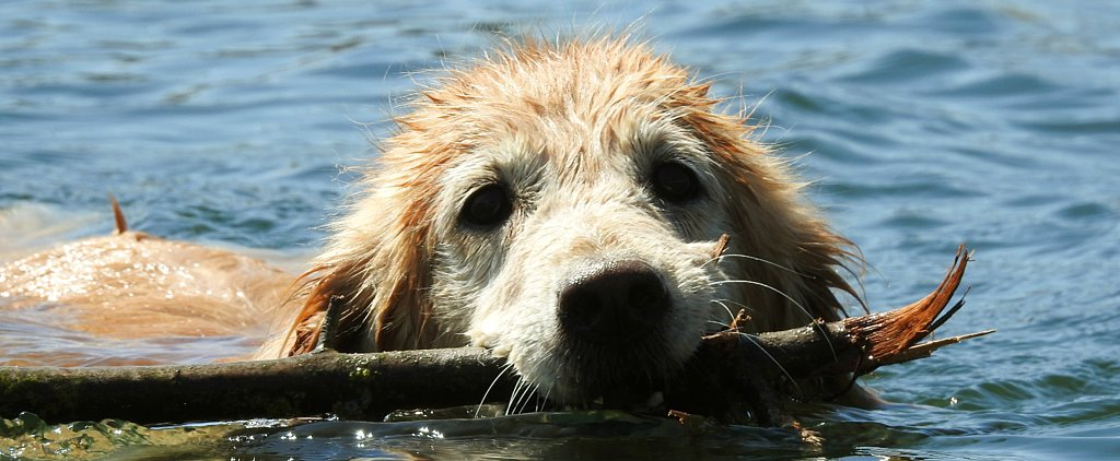 Tips to Keep Your Dog Safe Near the Water