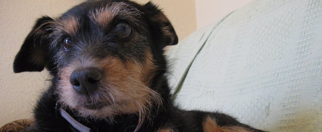 5 Reasons to Adopt a Senior Pet and 5 Ways to Make Them Feel at Home