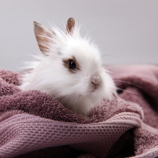 Rabbit Bath Videos Are Actually the Opposite of Cute