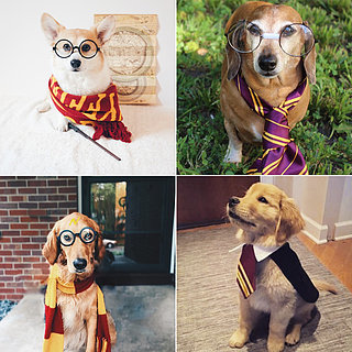 Harry Potter Costumes For Dogs