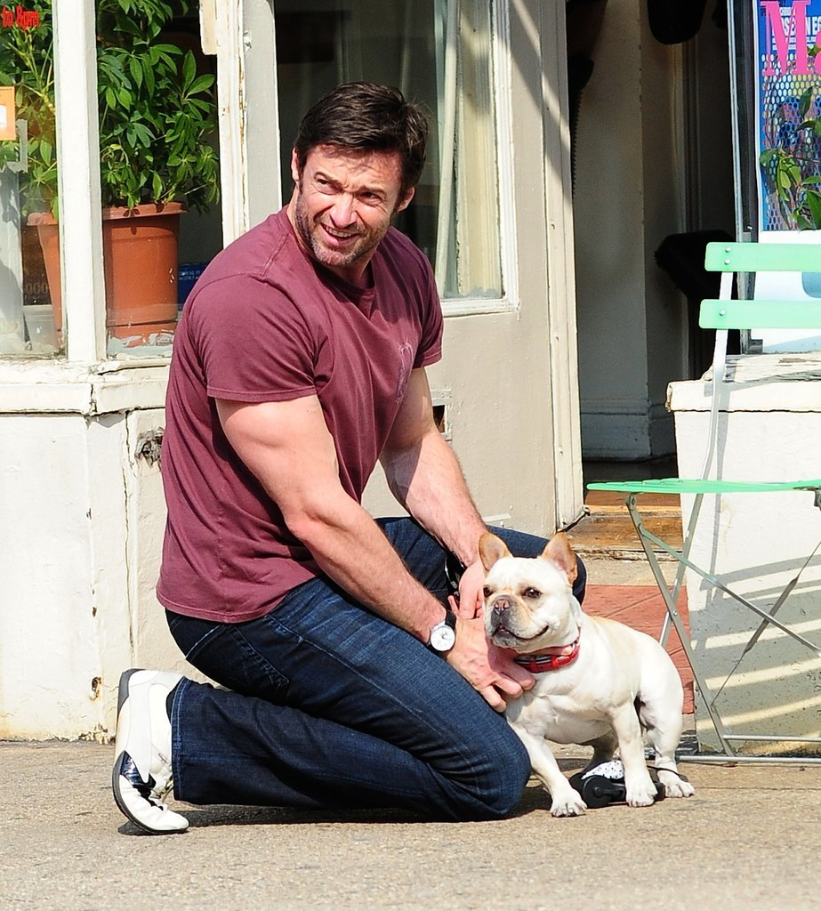 Hugh Jackman's Frenchie, Mochi, was by his side during an NYC walk in April 2013.